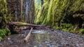 Hiking Oneonta Gorge