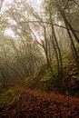 Hiking Path through Foggy Forest Royalty Free Stock Photo