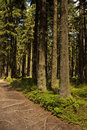 Hiking path in the forest Royalty Free Stock Photos