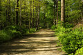 Hiking path through a forest Stock Images