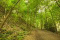 Hiking path in a forest green leaf canopy Stock Images