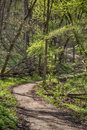 Hiking path in forestville state park sun streaked through the forest Royalty Free Stock Photography