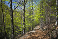 Hiking path high trees around thin covered with leaves Stock Photos