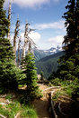 Hiking Path to Mount Rainer, Washington, USA Stock Photography