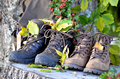 Hiking shoes color flowers autumn Royalty Free Stock Images