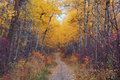 Hiking trail in autumn forest Royalty Free Stock Image