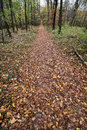 Hiking trail in the autumn forest deciduous with natural theme Royalty Free Stock Photo
