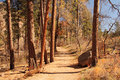 Hiking trail in bandelier national monument Royalty Free Stock Image