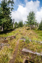 Hiking Trail In Bavarian Forest
