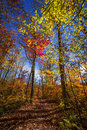 Hiking trail in fall forest autumn trees with colorful leaves and at algonquin park ontario canada Stock Photo