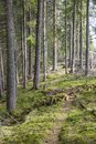 Hiking trail footpath through the forest in summer Stock Images