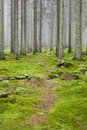 Hiking trail through a forest Stock Photos