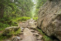 Hiking trail in forest the Royalty Free Stock Images