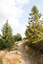 Hiking trail in forest fir Royalty Free Stock Photography