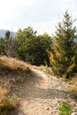 Hiking trail in forest fir Royalty Free Stock Photo