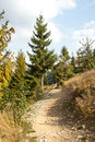 Hiking trail in forest fir Royalty Free Stock Photos
