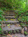 Hiking trail through the forest thailand Royalty Free Stock Photography