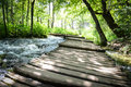 Hiking trail in the forest with trees Stock Images