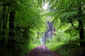 Hiking trail in green wet forest at spring Royalty Free Stock Photo