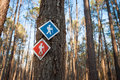 Hiking trail markers in forest red and blue on a tree Royalty Free Stock Photo