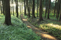 Hiking trail in the middle of forest Stock Image