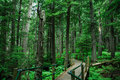 Hiking trail in rain forest Royalty Free Stock Photo
