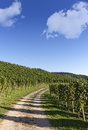 Hiking trail through vineyard landscape Stock Image