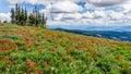 Hiking Among The Wild Flowers