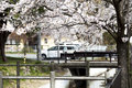Hikone castle cherry japan japan blossom season in japan very famous for its blossoms every spring Royalty Free Stock Image