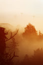 Hill fog morning floating over trees in small hills Royalty Free Stock Photography