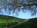 Hill top edge and osier branch on blue sky in spring ascending footpath of beautiful day Stock Photos