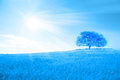 Hill with tree and sun rays planet earth globe scenic paradise a single on a of in the blue sky Royalty Free Stock Photos