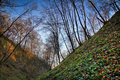 Hillock in the forest, autumn season. Royalty Free Stock Photography