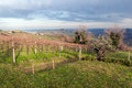 Hills of cesena on a beautiful winter day Royalty Free Stock Image