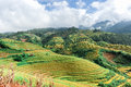 Hills of rice terraced fields with cloudy sky Stock Photos
