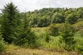 Hills rolling and woods at the site of the abandoned town of spruce west virginia Stock Photo