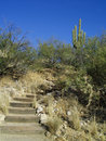 Hillside pathway and steps Royalty Free Stock Photos