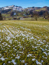Hillside peaceful small town and field in winter switzerland Royalty Free Stock Images