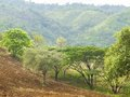 Hillside planting areas agriculture county landscape Royalty Free Stock Image