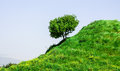 Hillside a springtime landscape with a lone tree on a grassy meadow Stock Photo