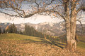Hilltop view tree with towards sengsengebirge mountain range and hoher nock mountain Stock Photo