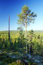Hilly forest a forested landscape in central karelia Royalty Free Stock Image