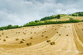 Hilly landscape rural with hay bales Royalty Free Stock Photo