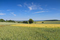 Hilly landscape with wheat fields under a blue sky wetterau hessen germany Stock Photography