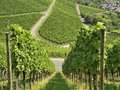 Hilly vineyard #17, Stuttgart Stock Image