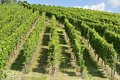 Hilly vineyard #7, Stuttgart Stock Photography