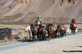 Himalayan herdsmen leads horses caravan sarchu plains india september young with goods across sarchu plains mountains at altitude Stock Photo