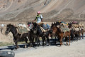 Himalayan herdsmen leads horses caravan sarchu plains india september young with goods across sarchu plains mountains at altitude Stock Image