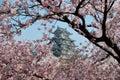 Hrad během třešeň květ