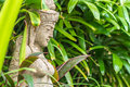 Hindu statue in a tropical garden in bali Royalty Free Stock Photo